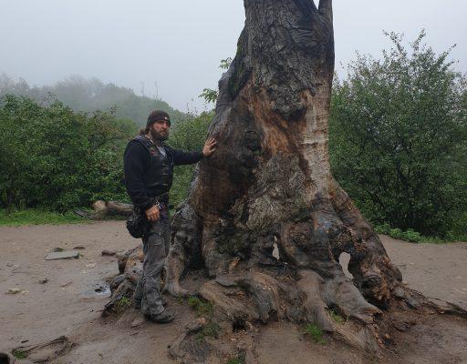 Хирург: Дерево у главной церкви монастыря Сурб Аствацацин (Пресвятой Богородицы) в Армении.